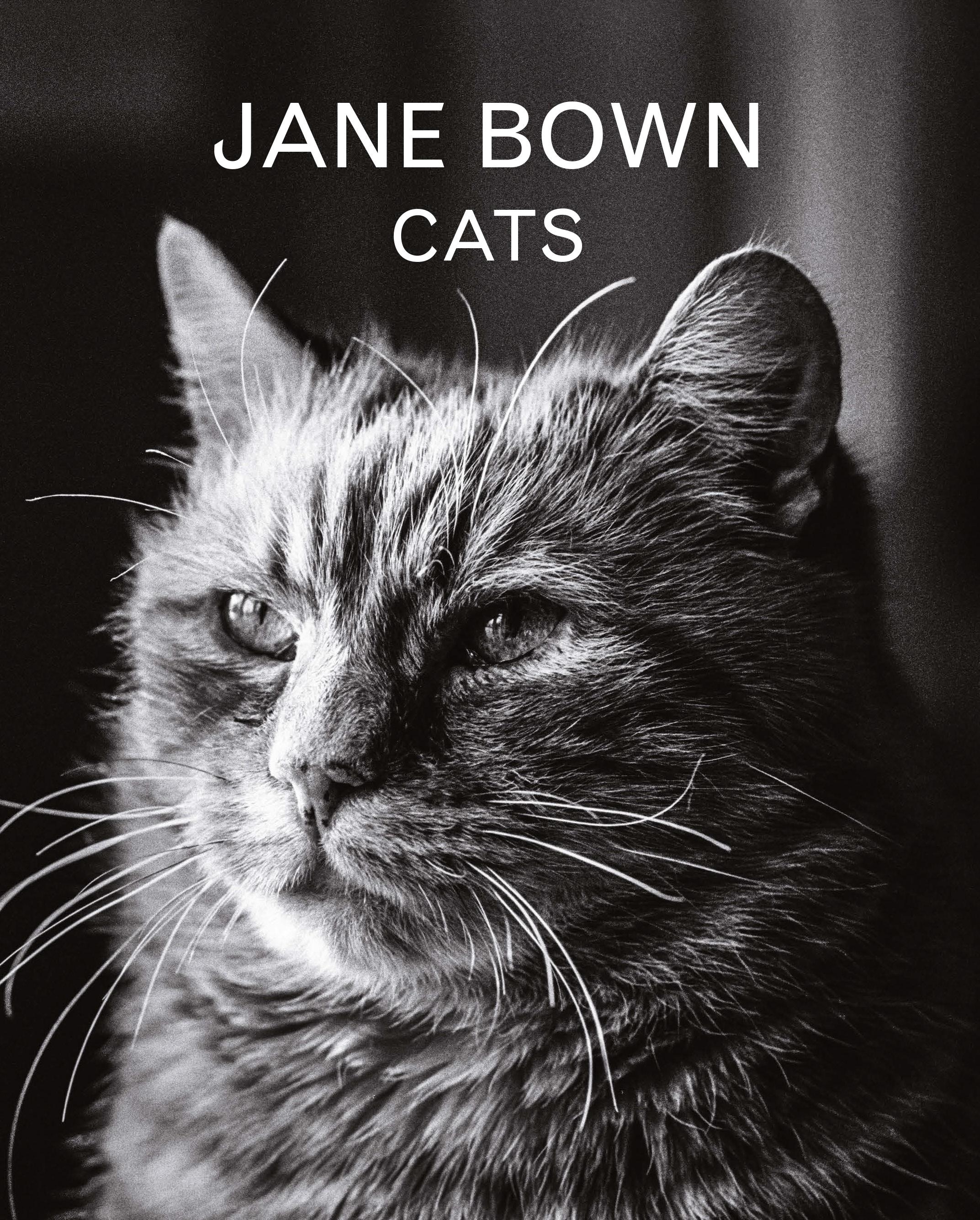 Jane Bown Cats Jane Bown 9781783350872 Allen Unwin Australia