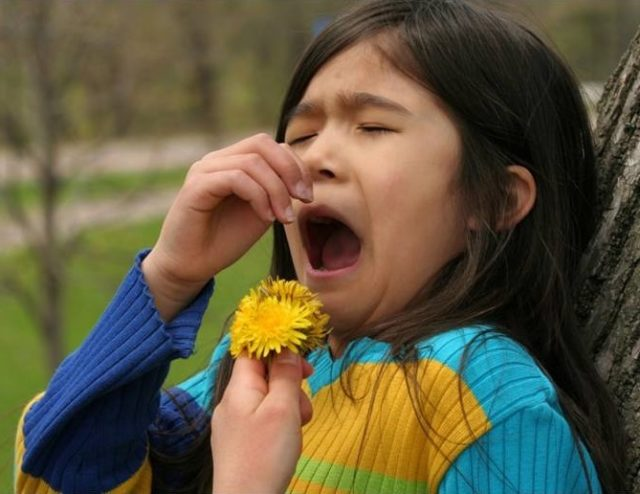 Asthma Triggers Allergy