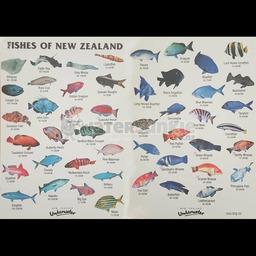 Fish ID Slate