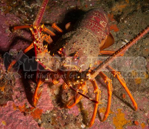SSI Marine Ecology / Underwater Naturalist