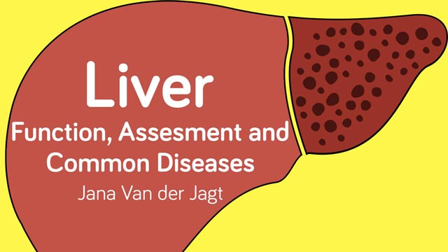 Image for Liver Function, Assessment and Common Diseases