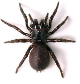 other_funnel_web_spider