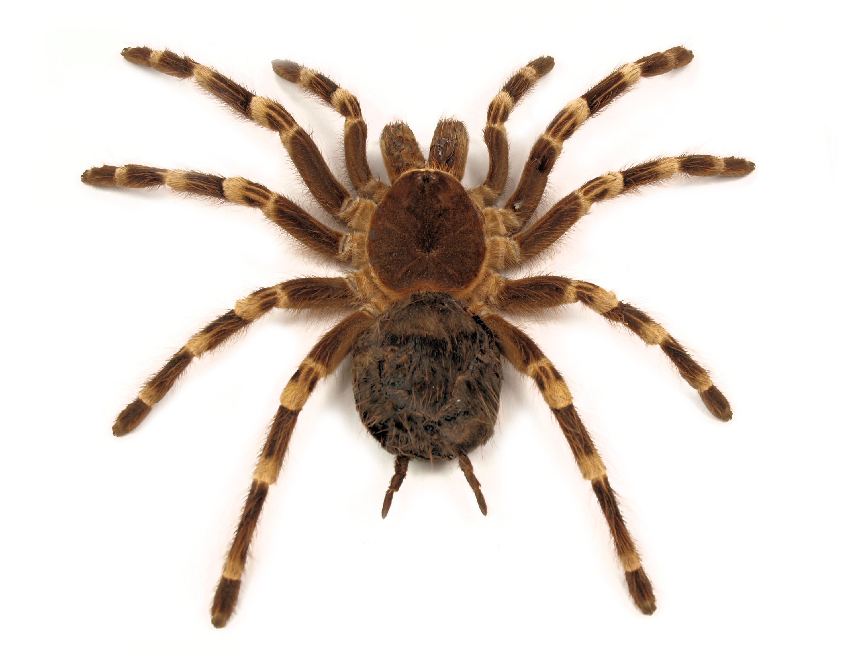 Australian Spider Identification and Spider Bite Treatment ...