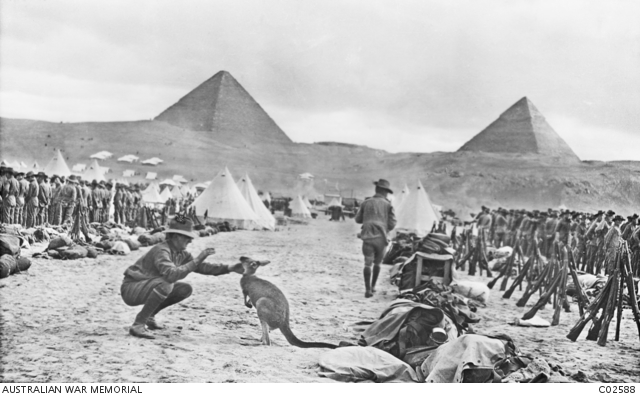 Lines of the Australian 9th and 10th Battalions at Mena Camp, looking towards the Pyramids. The soldier in the foreground is playing with a kangaroo, the regimental mascot. Many Australian units brought kangaroos and other Australian animals with them to Egypt, and some were given to the Cairo Zoological Gardens when the units went to Gallipoli.