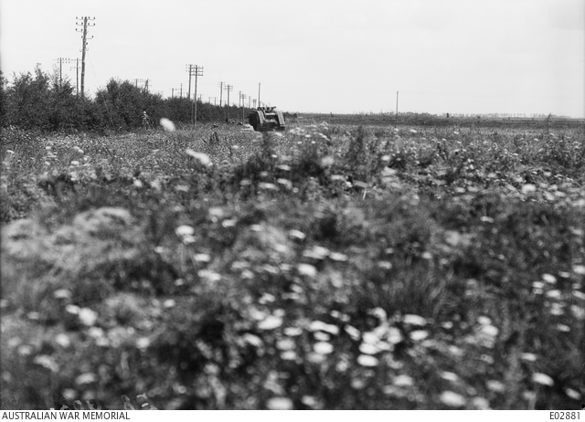 Tank advancing through a field of flowers