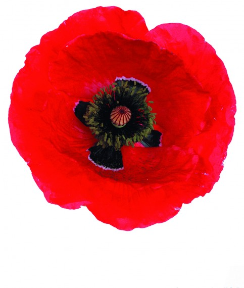 Membership Poppy Individual - 1 Year