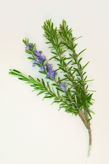Membership Rosemary Individual - 1 Year