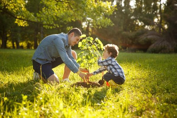 Families can hold a tree planting memorial with ashes following a cremation.