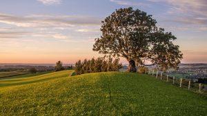 tree memorial after death