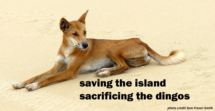 Eradicate the Goats, then Poison the Dingoes image