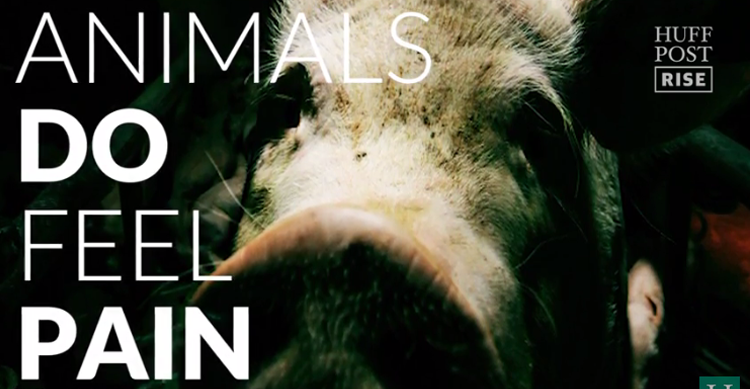 A Plea for the Animals image