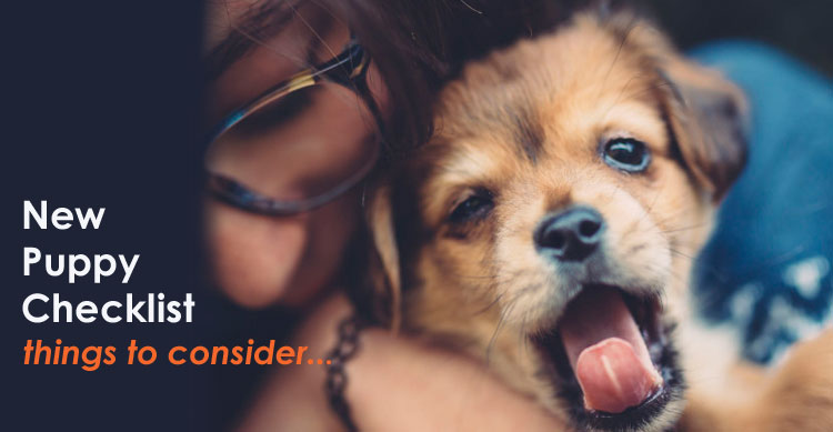 Top Things to Consider Before Getting a Puppy image