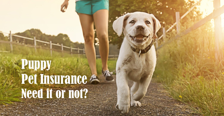 Do You Need Pet Insurance for Puppies? image