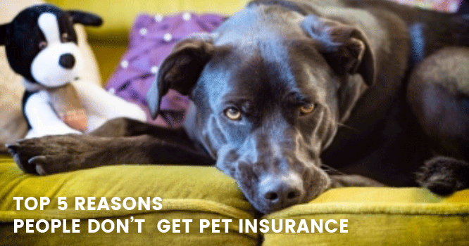 5 Top reasons why pet owners avoid pet insurance image