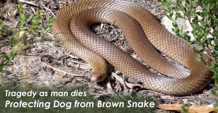 Man dies of snake bite after defending his dog  image
