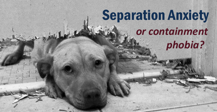Separation Anxiety in Dogs & Dog Containment Phobia image