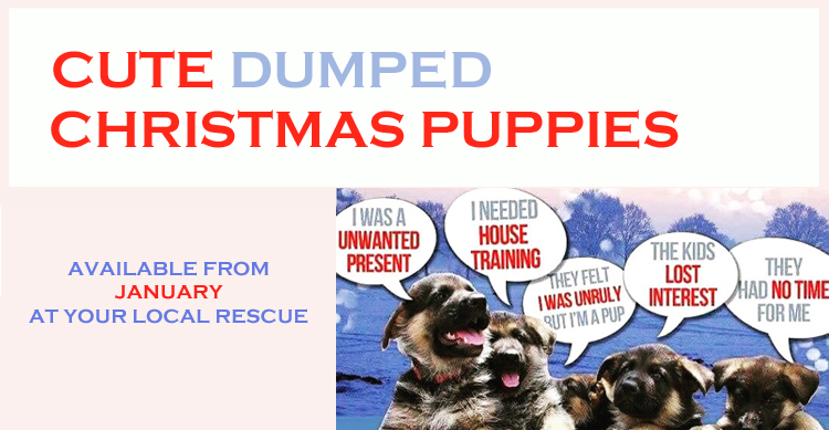 Think before buying - puppies are not gifts image