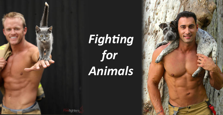 Australian Firefighter Calendar - fundraising for Animals image