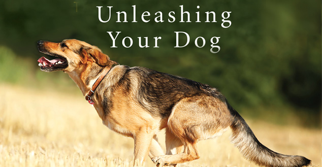 Unleashing your dog - giving your dog the best life possible image