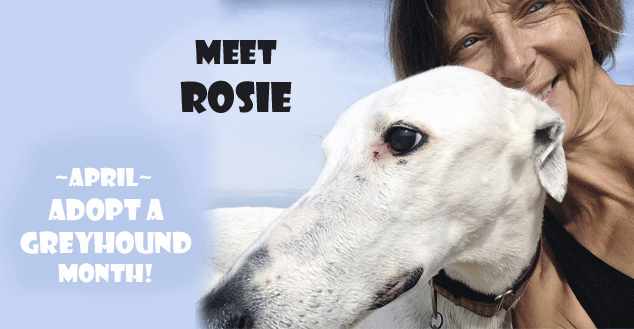 April is 'Adopt a greyhound month' image