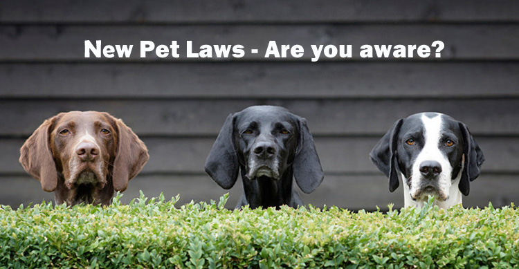 New Laws for Selling and Rehoming Pets | PerfectPets com au