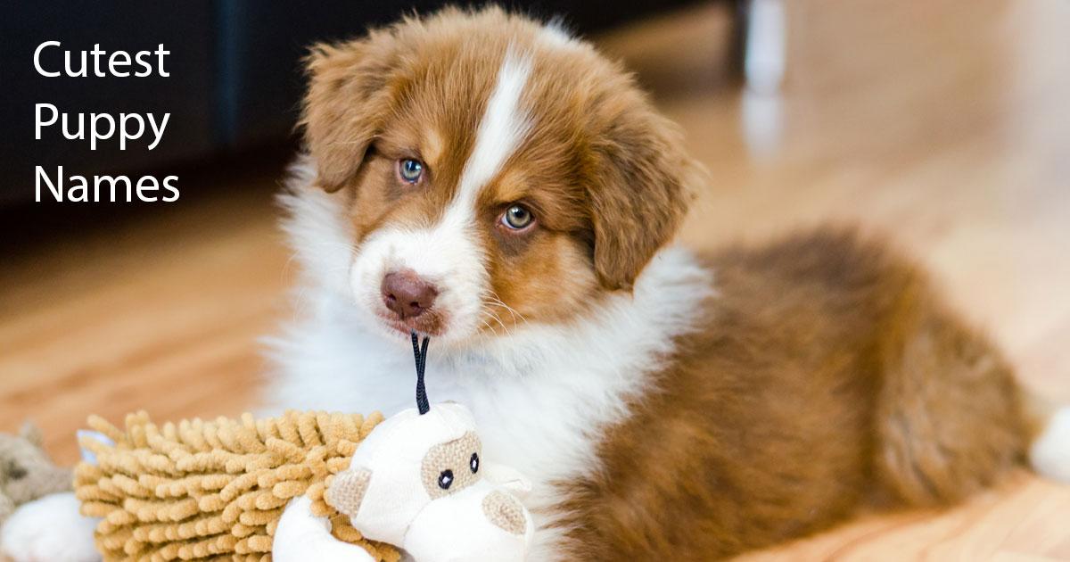 Cute Dog Names image