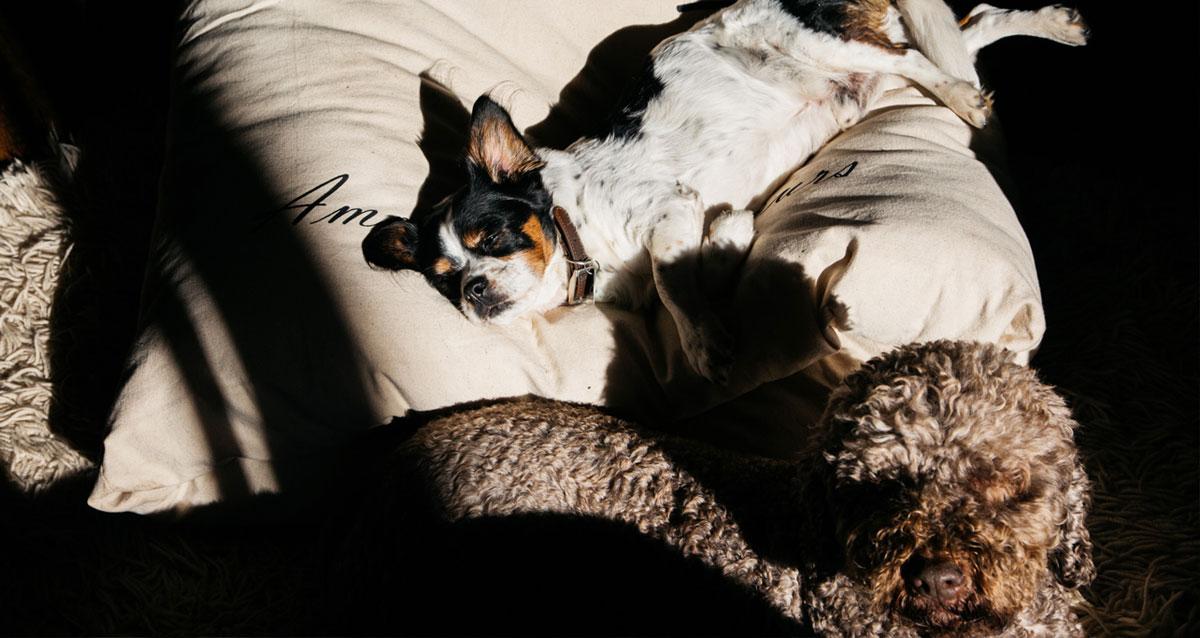 Miyow & Barkley Snuggle Pod Dog Bed gallery image
