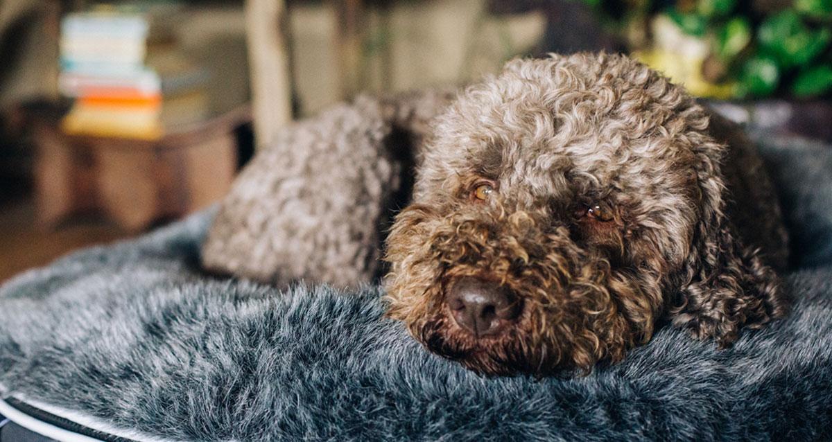 Best Dog Beds 2020 image