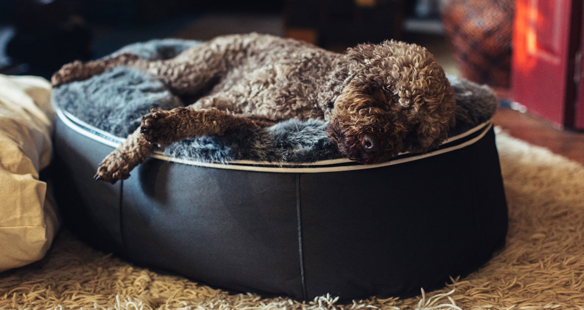 Ambient Luxury Dog Bed gallery image