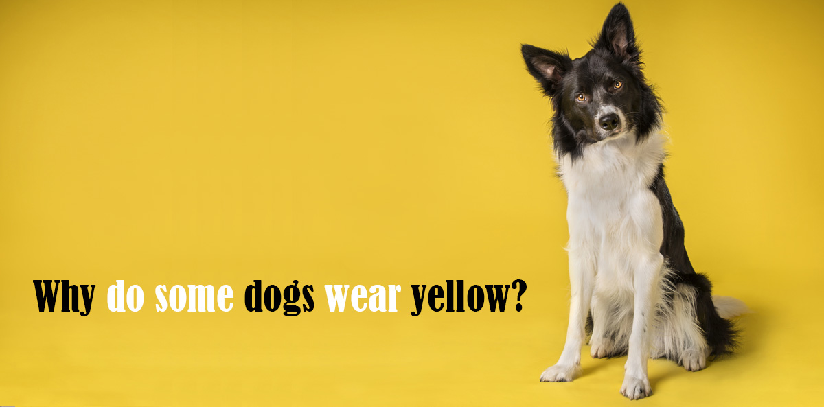 The Yellow Dog Project image