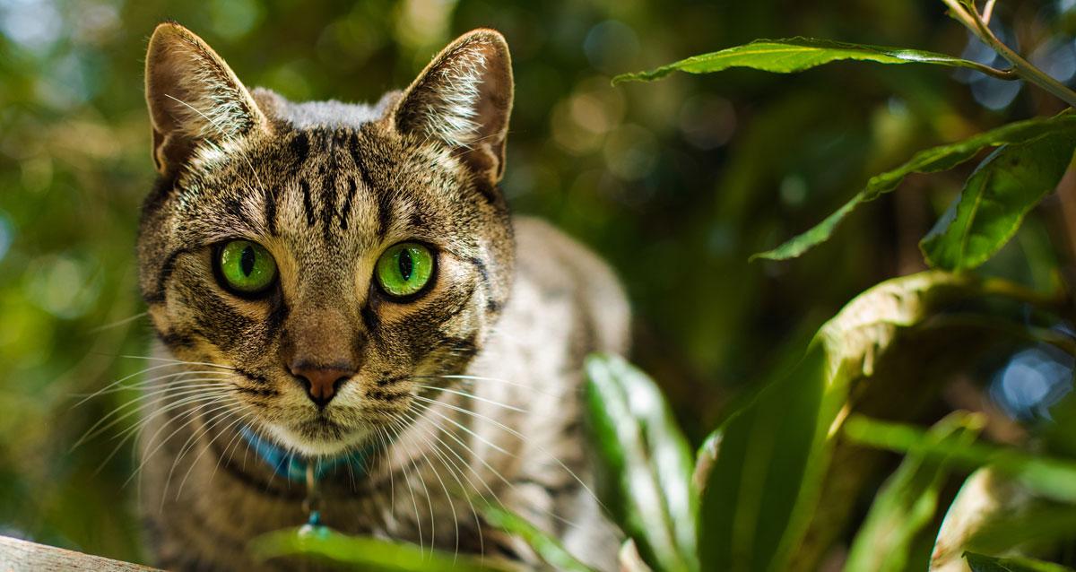 Indoor V Outdoor Cats image