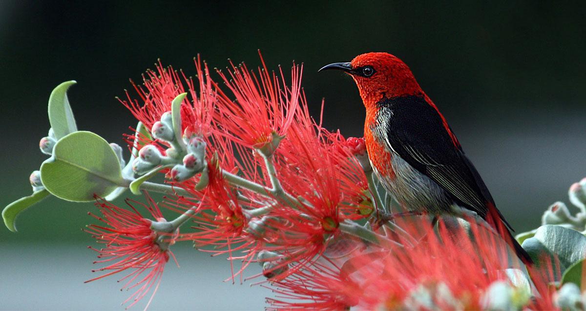 Wildlife in suburban Australia, including your own backyard image