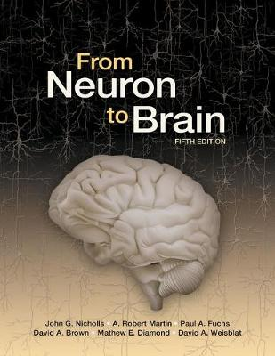 From Neuron To Brain