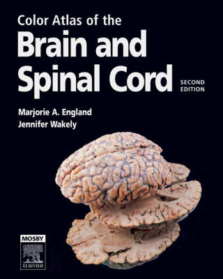Color Atlas of the Brain and Spinal Cord: An Introduction to Normal Neuroanatomy
