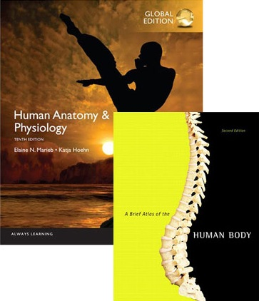 Human Anatomy And Physiology 9th Edition - 6 Textbooks | Zookal