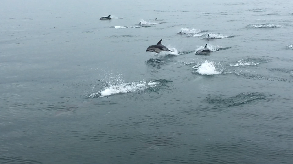 Amazing trip with dolphins!