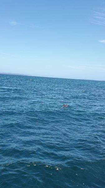 Beautiful boat and up and personal with a dolphin