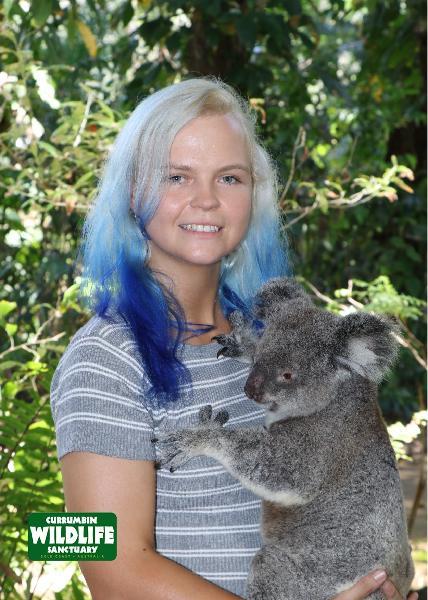 Professional Koala Photo