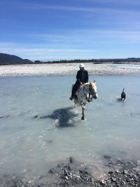 Franz Josef horse trek
