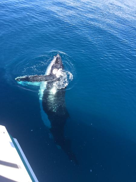 Whale Watching - Half Day Trip Aboard QuickCat II - Hervey