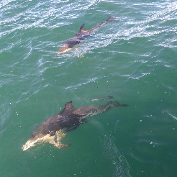 Excellent Dolphin Encounters