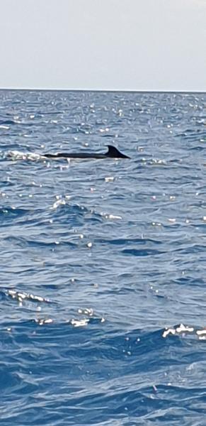 Hervey bay humpbacks