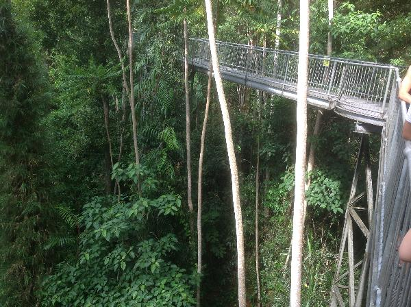 The Canopy Walk high over the forest & Cairns Surrounds Highlights Tour - including Paronella Park and ...
