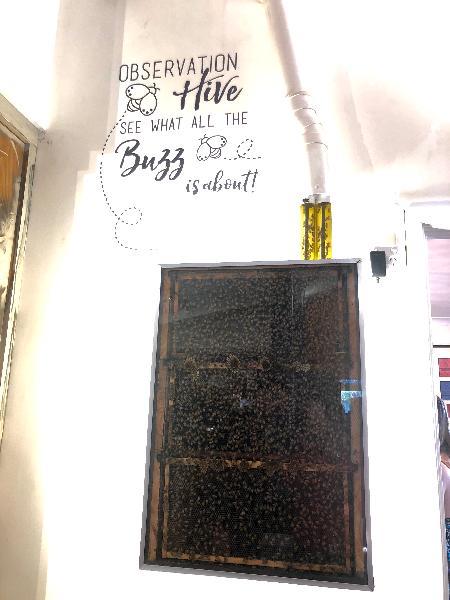 Visit to honey farm