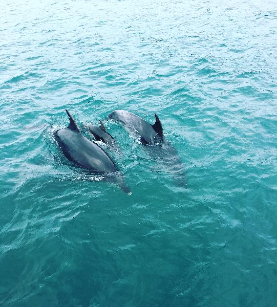 Amazing seeing dolphins in their natural habitat.