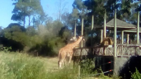 Best Zoo in New Zealand