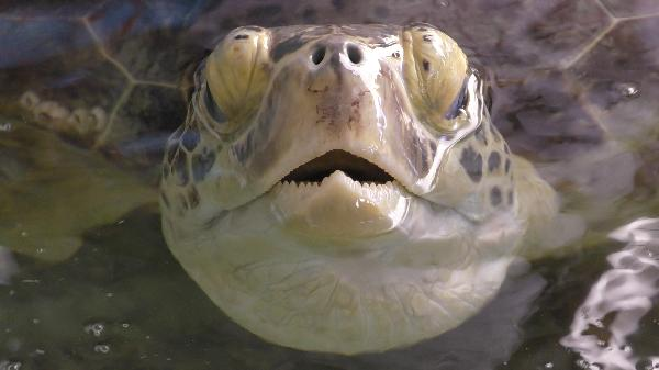 Turtle coming up for breath!!