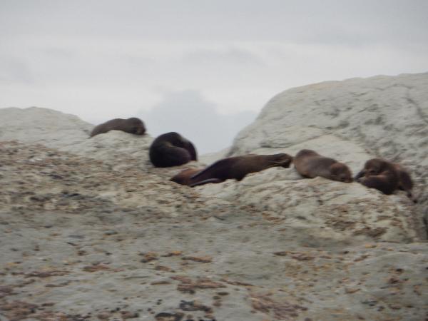 Lazying around on the rocks