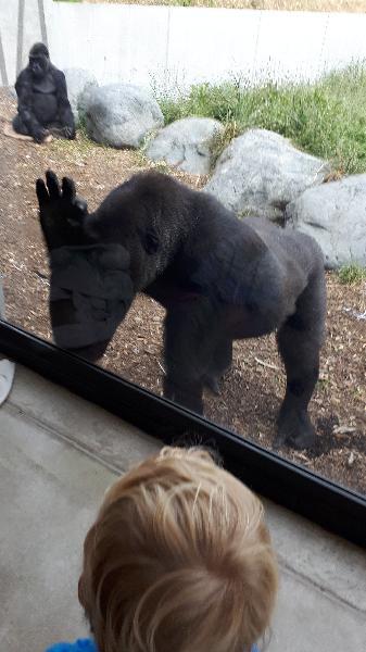 Orana Zoo is fantastic!!