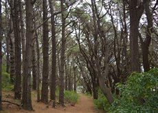 Mount Victoria forest